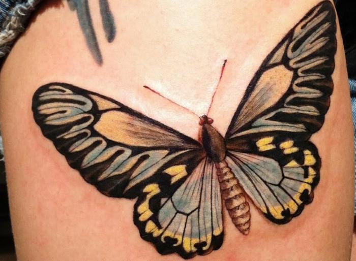 papillon sur le dos