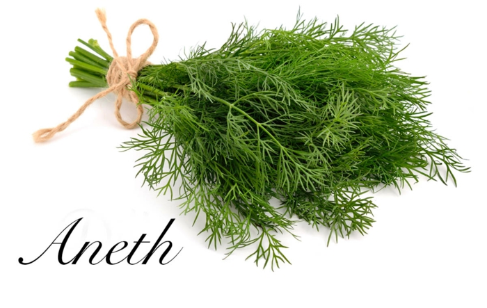 Les herbes aromatiques l'aneth