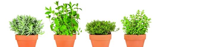 Herbes aromatiques en pots sur la terrasse
