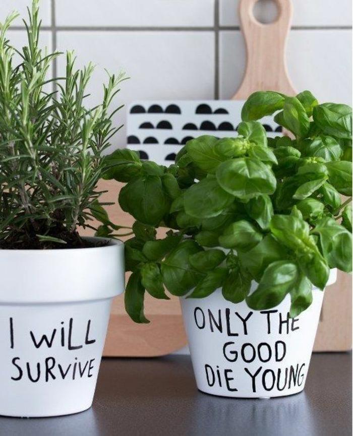 Pots d'herbes aromatiques avec un message