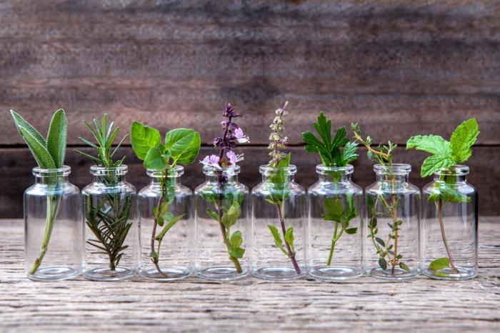 Herbes aromatiques pour planter en pot
