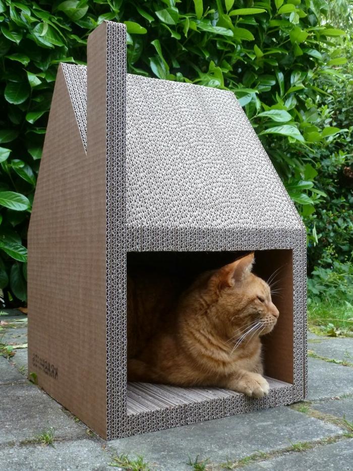 maison extérieure chat