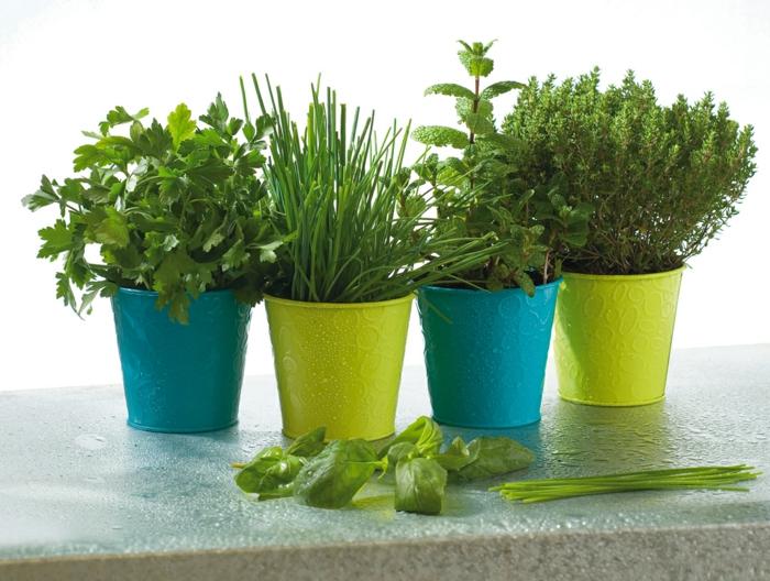 Herbes aromatiques en pot jaune et bleu