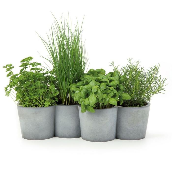 Palntez les herbes aromatiques en pots-menthe,romarin,basilic