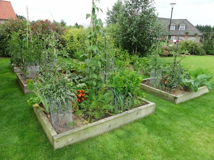 potager installé dans un jardin