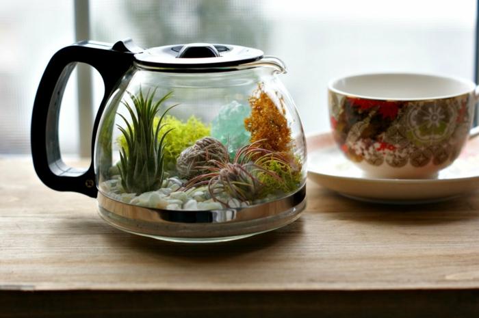 terrarium dans pot de caffee