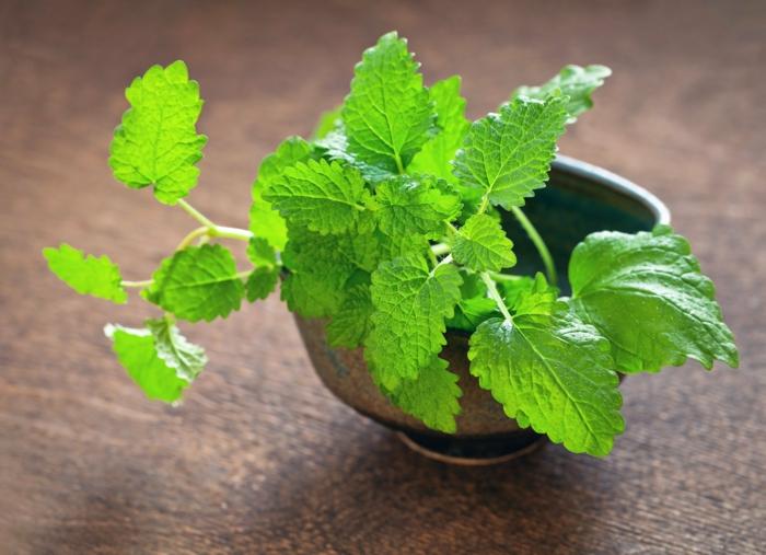 Quelles sont les plantes anti moustiques pour loigner les insectes - Quelles sont les plantes que l on peut bouturer ...