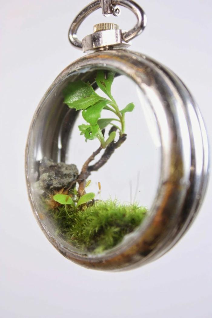 terrarium plante petit sous la forme d'un bijoux