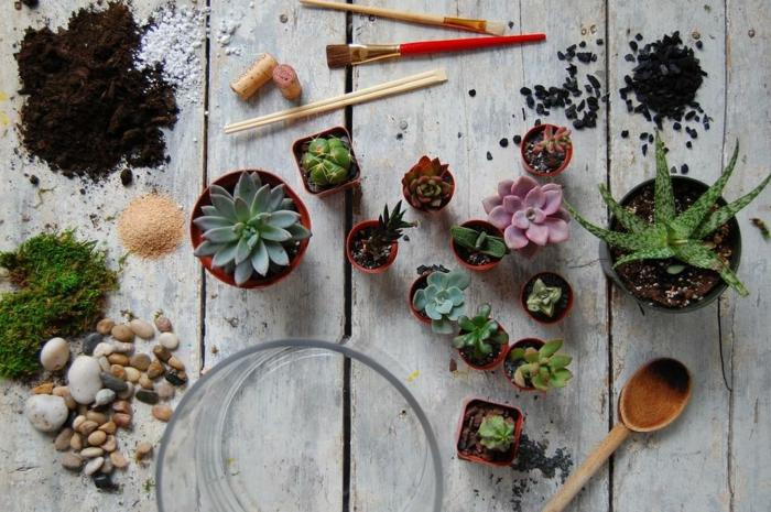 comment faire terrarium plante