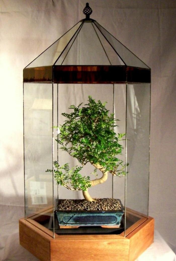 terrarium avec bonsai