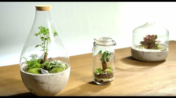 terrariums hermétiques
