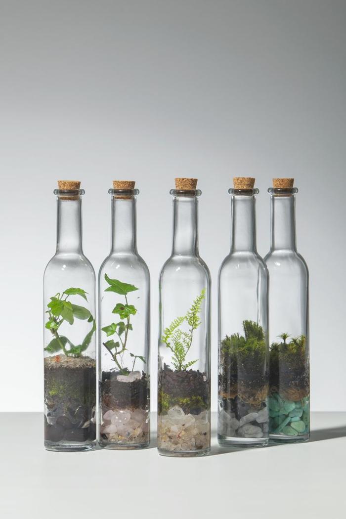 les plantes et les bouteilles