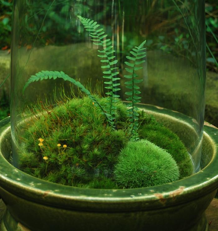 terrarium plante vert