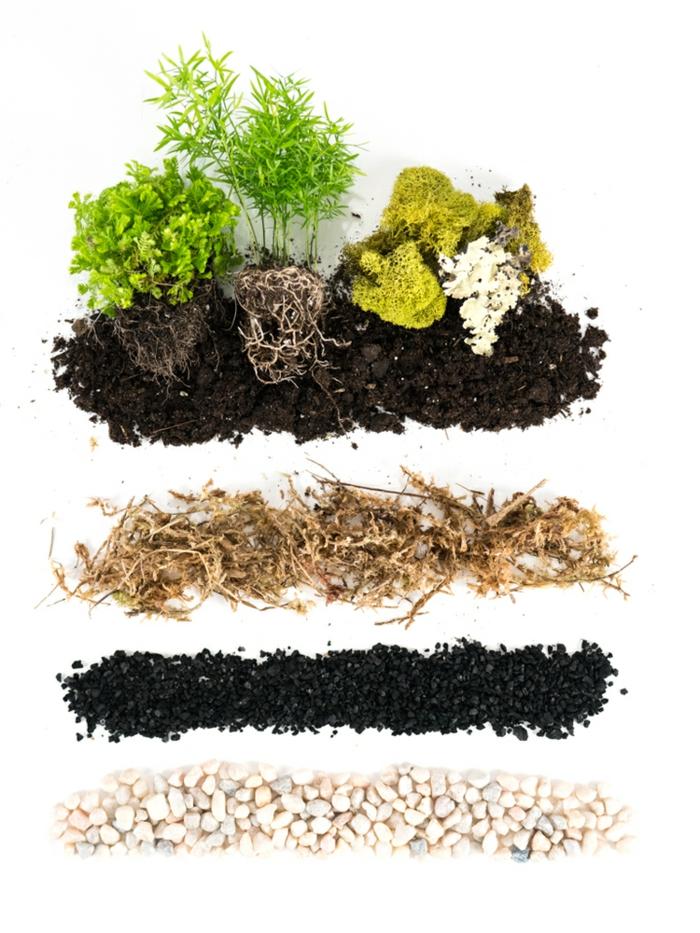 diy terrarium plante à la maison