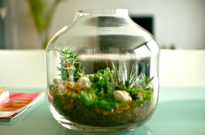 un petit terrarium