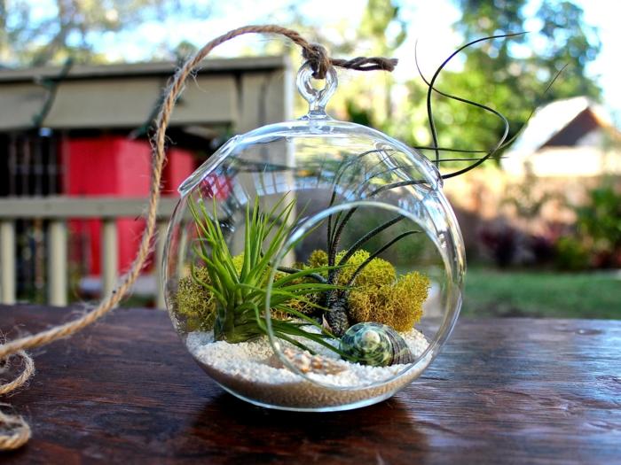 terrarium plante un petit jadin pour décorer la maison
