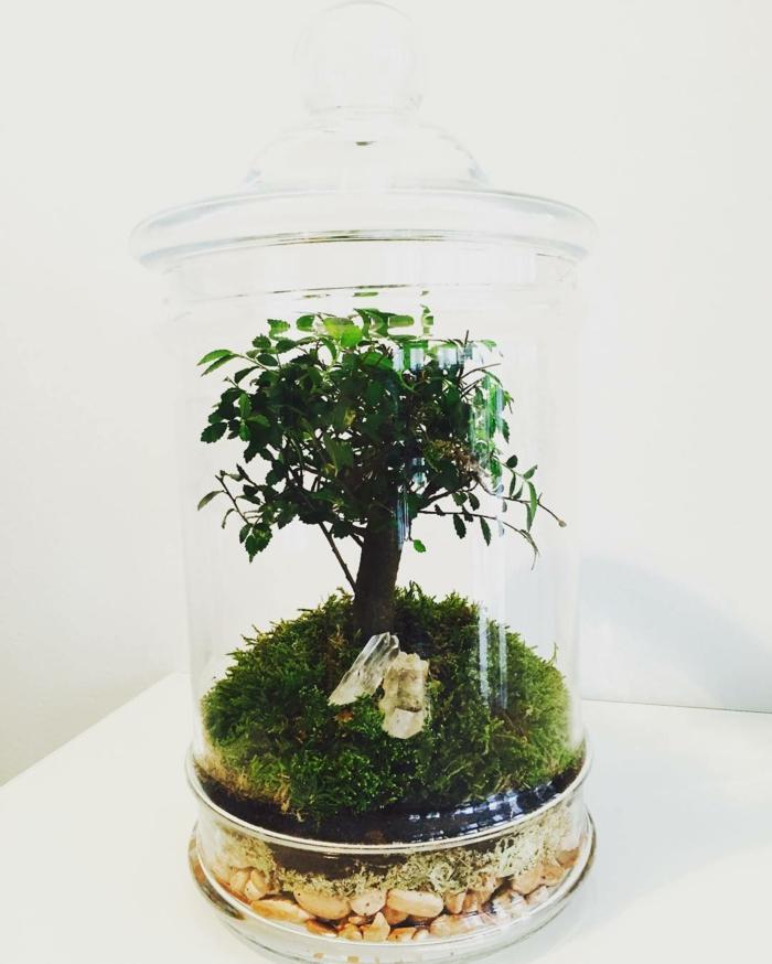 arbre dans un terrarium