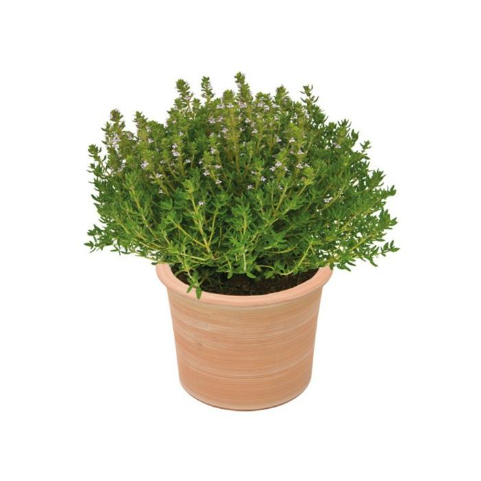 quelles sont les plantes anti moustiques pour loigner. Black Bedroom Furniture Sets. Home Design Ideas