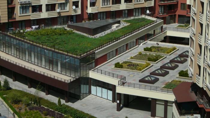 toiture plantation extensive