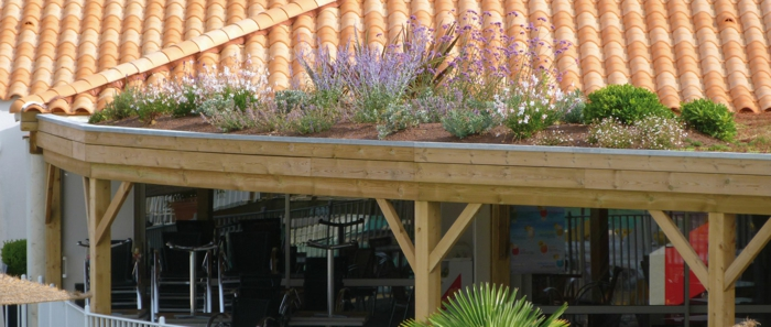 toiture plantation semi-intensive
