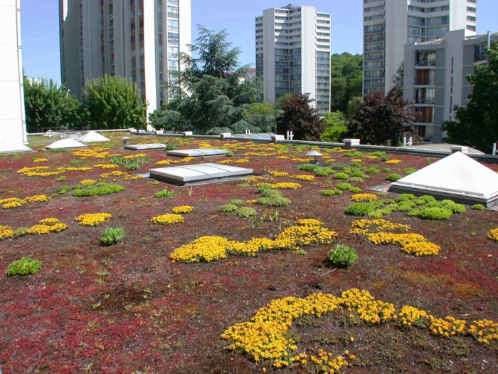 toiture-terrasse verte