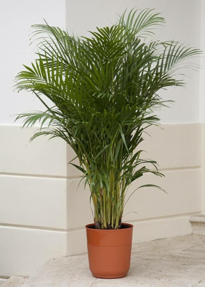 les ficus sont aussi des plantes dépolluantes
