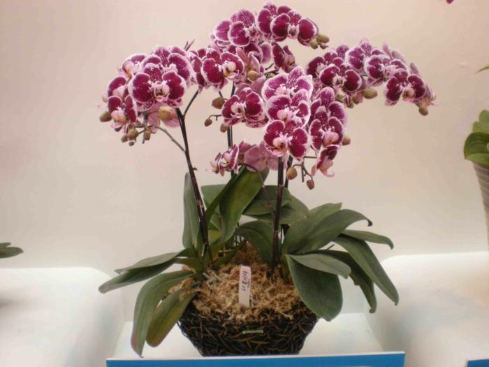 effectivement l'orchidée est une plante dépolluante