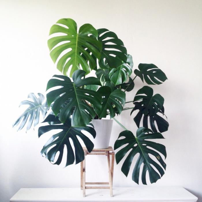 par ailleurs le philodendron est une plante dépolluante