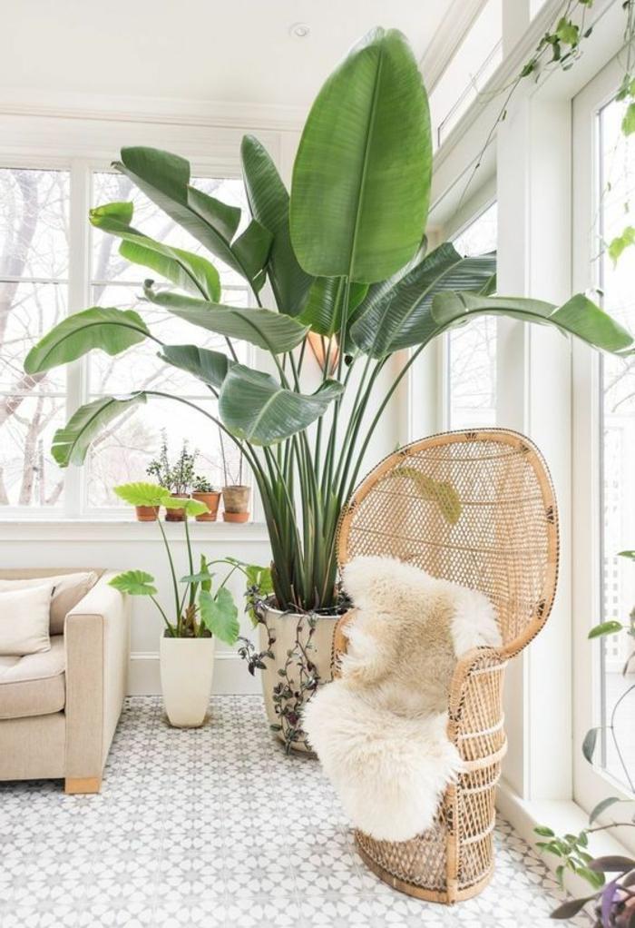 sans doute les plantes géantes sont très effectives pour la purification de l'air
