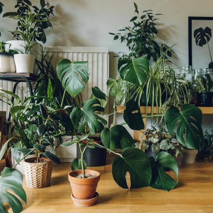 plantes purifiant l'air
