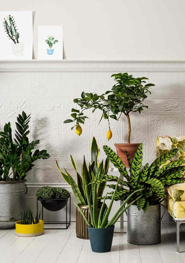 ce sont des plantes qui purifient l'air