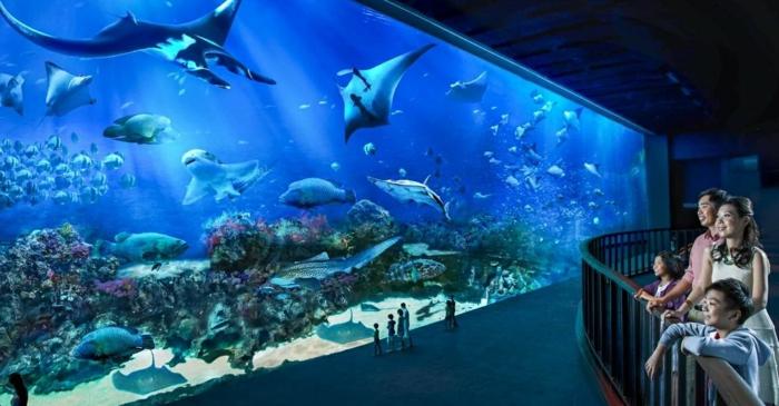 aquarium de singapour