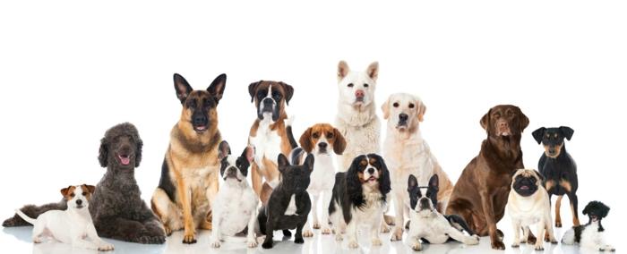 Niche pour chien - confort pour votre meilleur compagnon