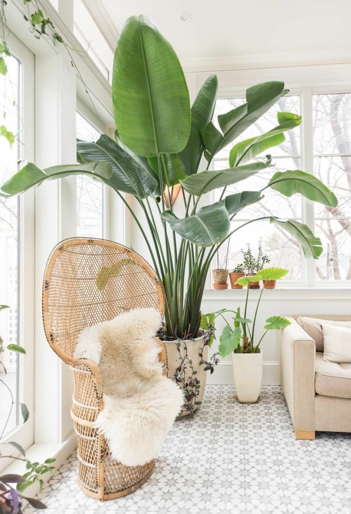 comment entretenir vos plantes peau de banane