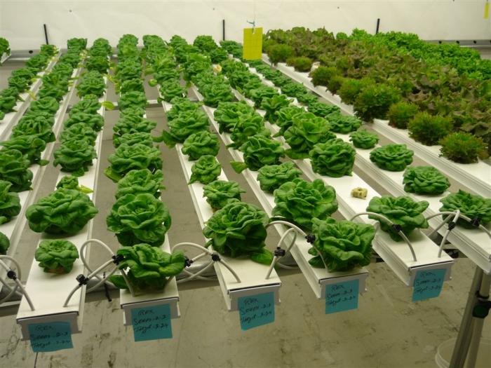 cultiver des végétaux en hydroponie