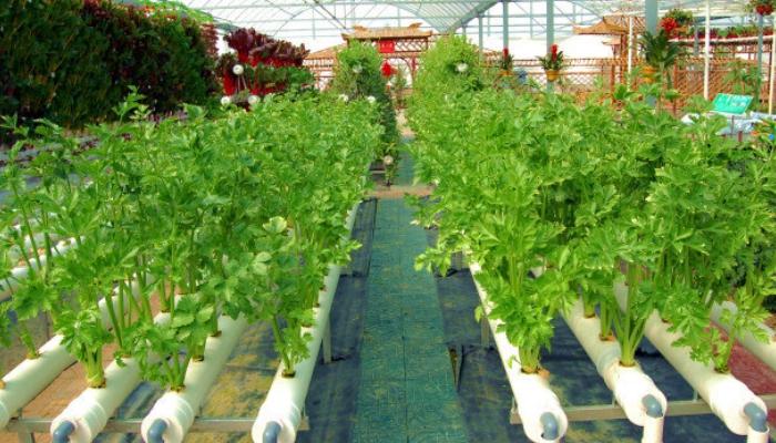 Culture hydroponique cultiver des plantes sans terre - Colture idroponiche in casa ...