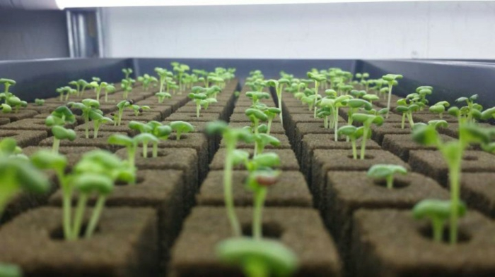 Culture hydroponique cultiver des plantes sans terre - Small space farming image ...