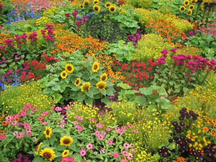 fleurs typiques pour les jardins à l'anglaise