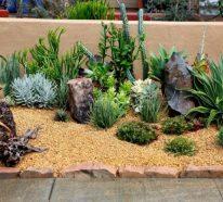 Jardin de rocaille : idées et astuces pour l\'aménager