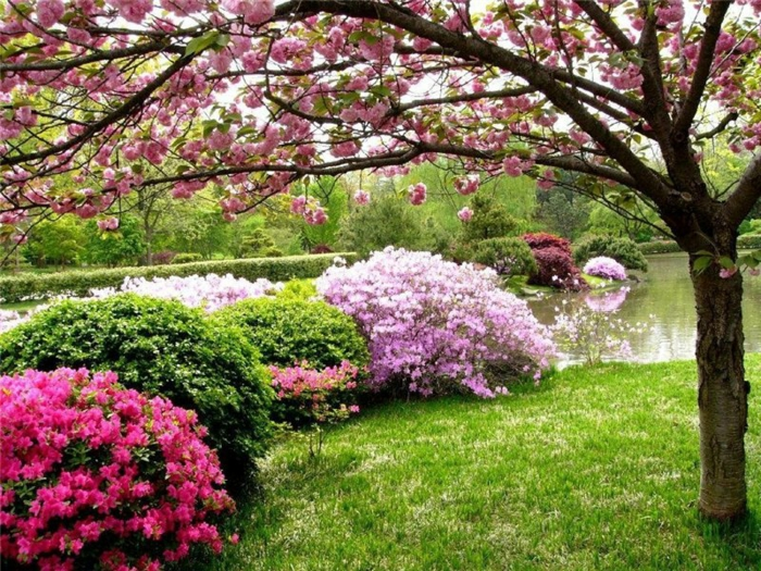 jardin à l'anglaise arbustes à fleur