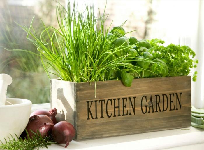 jardin dans la cuisine