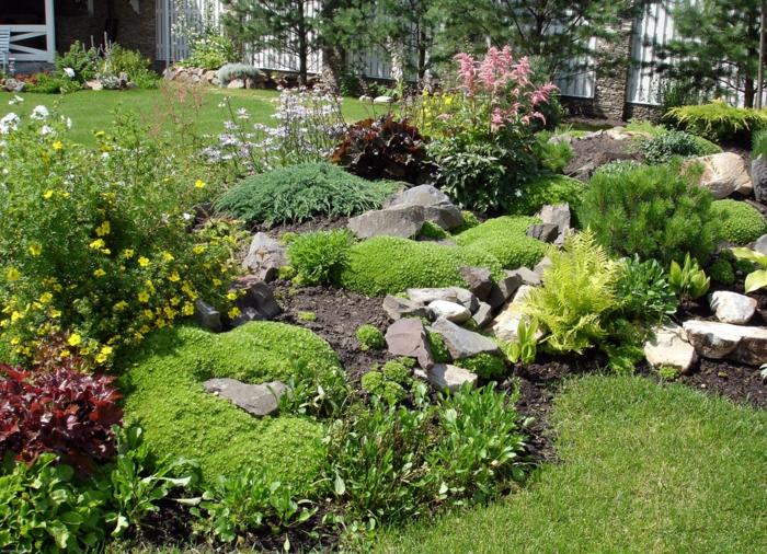 jardin de rocaille plantes