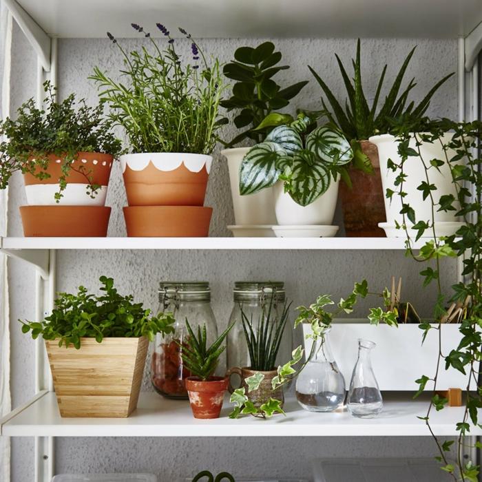 jardin intérieur sur étagères