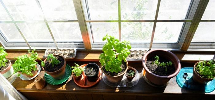 jardin sur appui de fenêtre