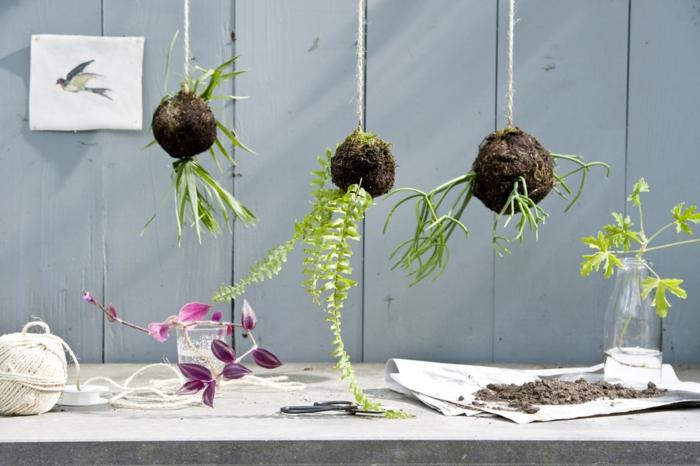 kokedama avec de plantes différentes