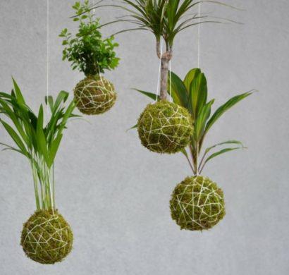 kokedama suspendu ou comment cultiver des plantes autrement. Black Bedroom Furniture Sets. Home Design Ideas