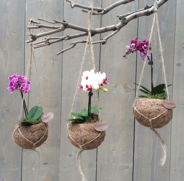 kokedama orchidées