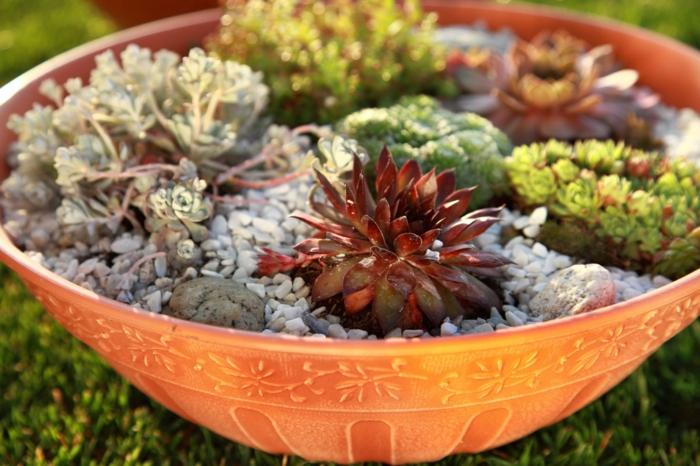 mini jardin de rocaille
