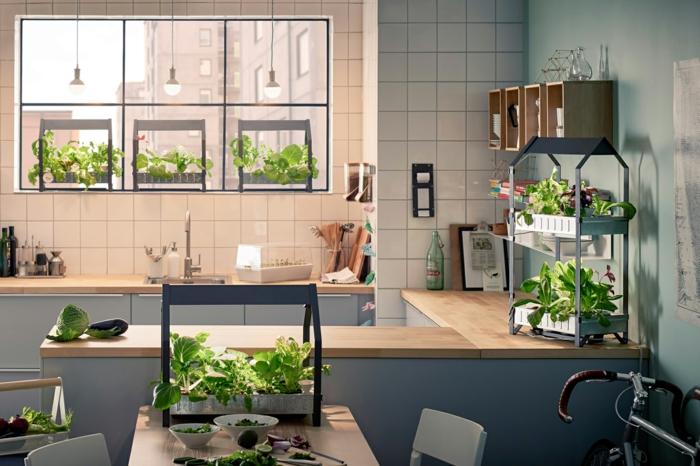 plantes dans une cuisine