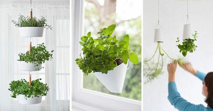 plantes suspendues jardin intérieur
